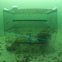 Cod Trap, Large, Two Entrances