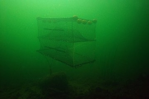 Cod Trap, Large, One Entrance