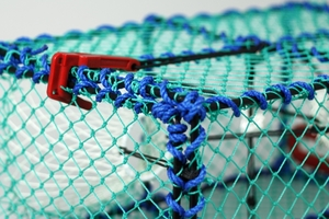 Prawn Creel, Green, Net Entrance